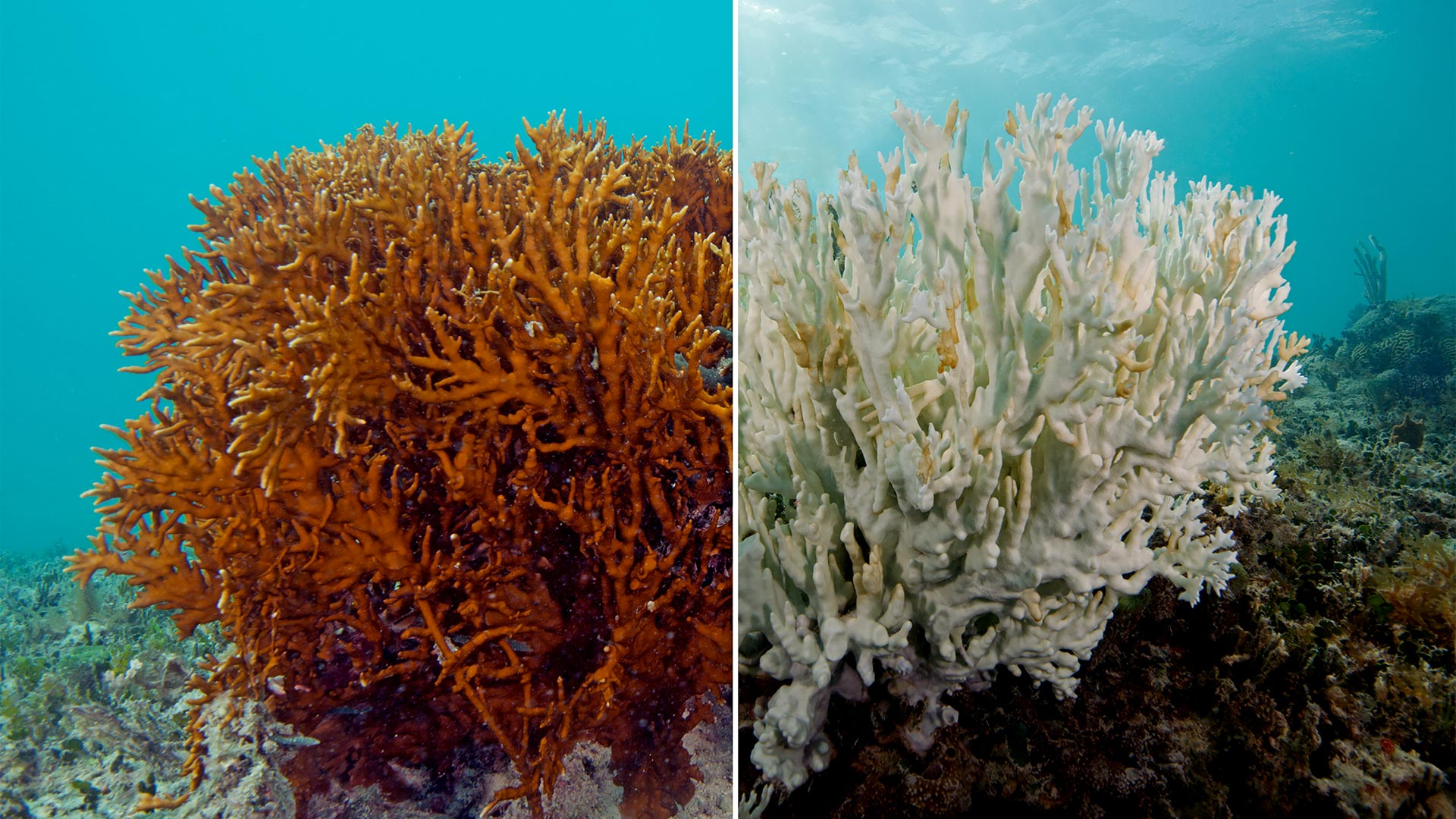 Effects of Oxybenzone on coral bleaching